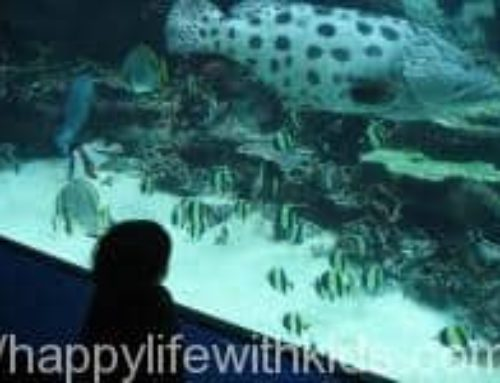 2008冬 クリスマスの沖縄旅行記 美ら海水族館