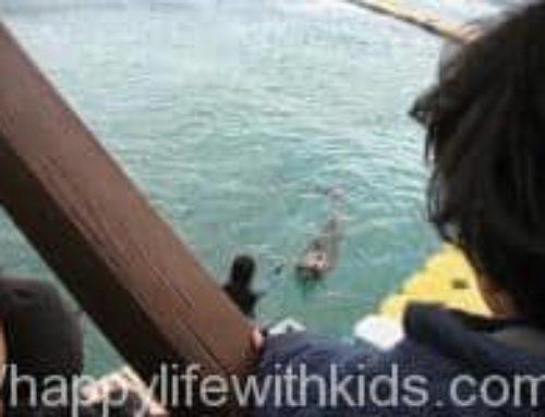 2008冬 クリスマスの沖縄旅行記 イルカのアクティビティ