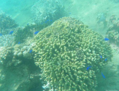 2013夏 格安沖縄旅行:真栄田岬の裏ビーチ