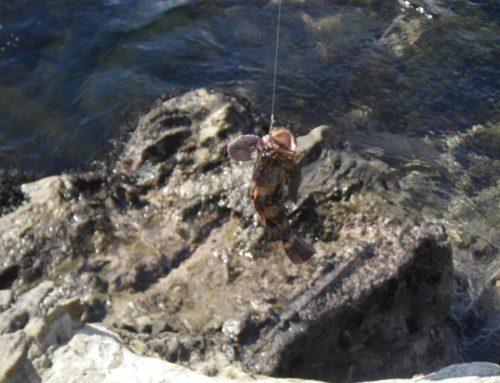 三浦半島で子供と魚釣り:荒崎公園