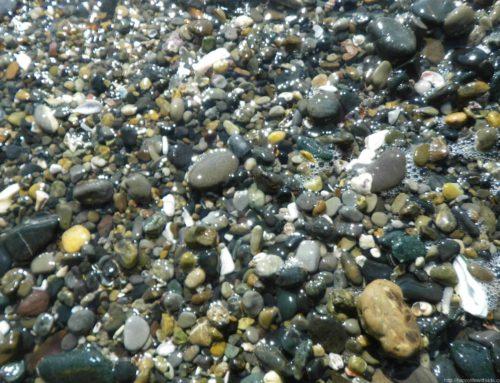 三浦半島で子供と宝石探し(石拾い):立石海岸
