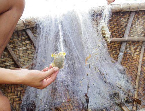 ベトナムホイアン子連れ旅行記 サンライズホイアンフィッシングツアー