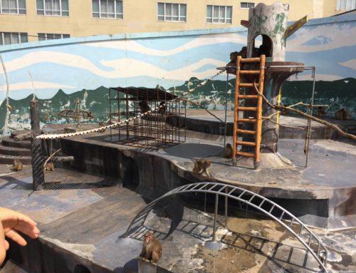 子連れ函館旅行へGO:湯の川温泉と函館市熱帯植物園