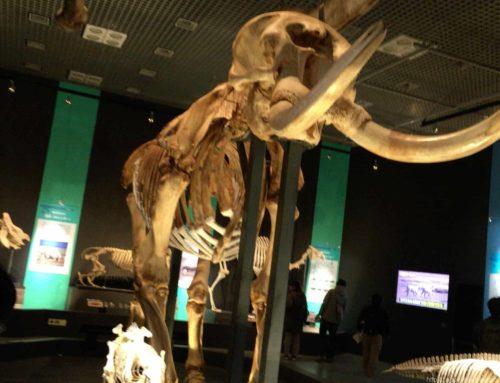国立科学博物館大哺乳類展2に行ってきました